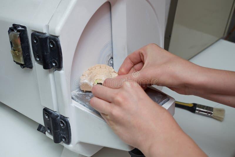Técnico dental fêmea que trabalha no laboratório dental fotos de stock