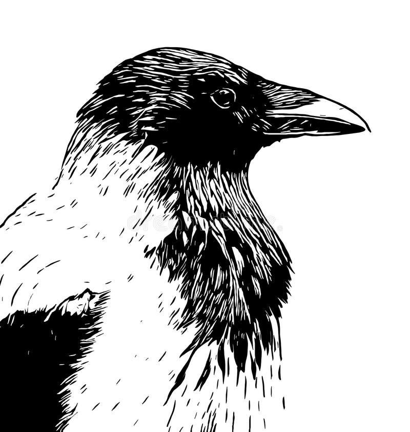 Tête à capuchon de profil de corneille dans dessin au trait noir et blanc encre illustration de vecteur