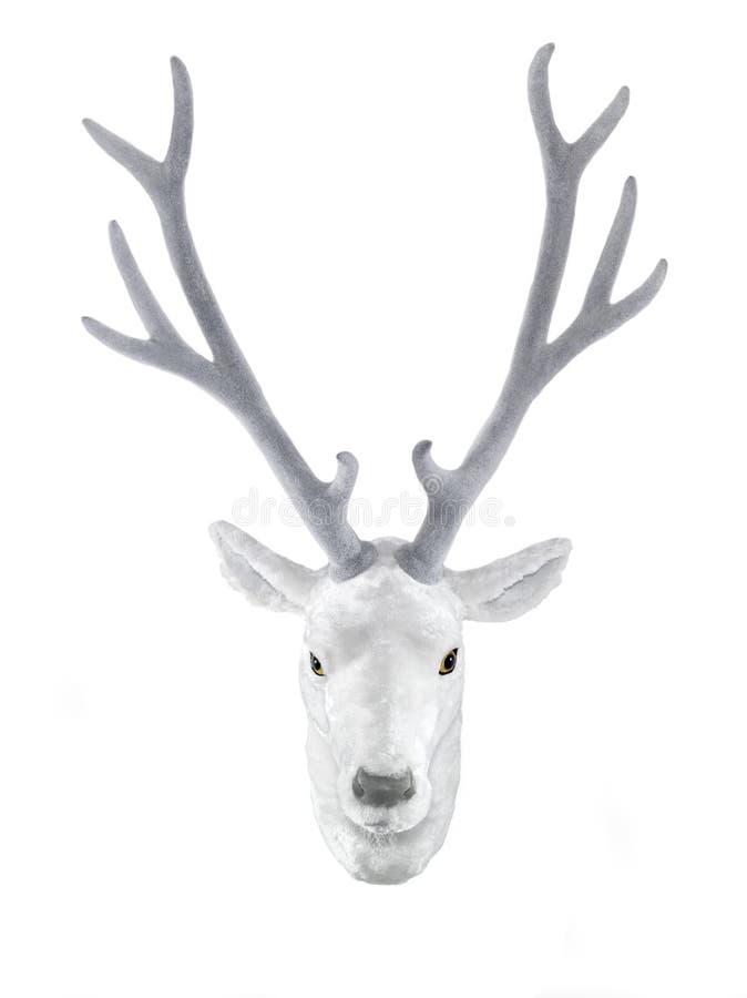 Tête bourrée blanche de cerfs communs photographie stock libre de droits