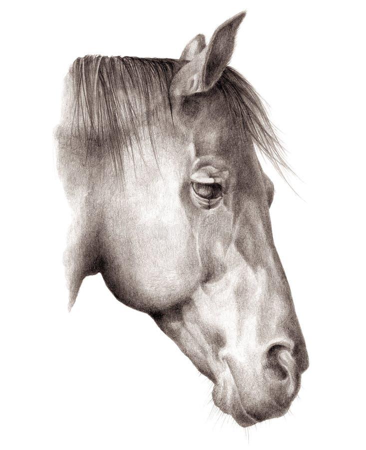 Tête-cheval illustration de vecteur