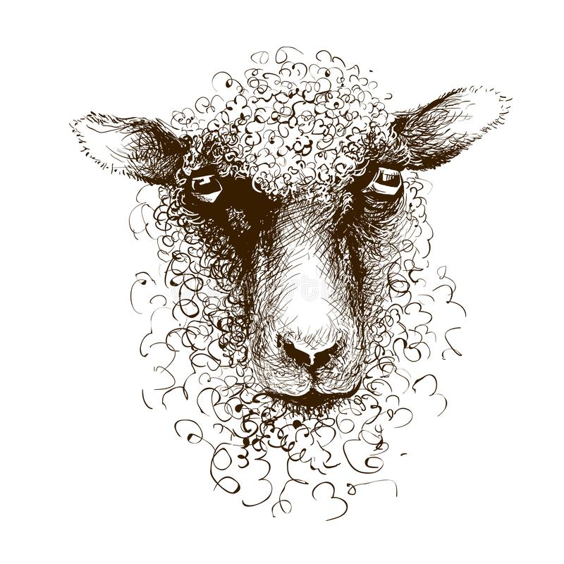 Tete D Agneau De Moutons Portrait Mammifere Animal Dessin D Encre Illustration De Vecteur Illustration Du Mammifere Dessin 144010976