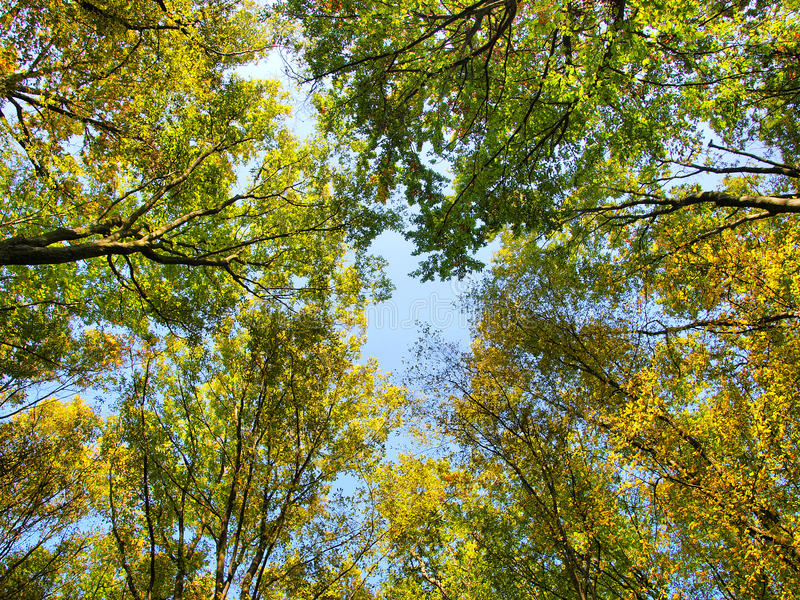 Tête d'arbres photos stock
