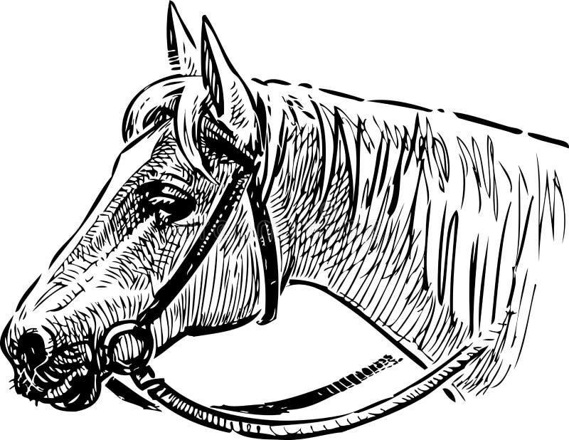 Tête d'un cheval dans un frein illustration libre de droits