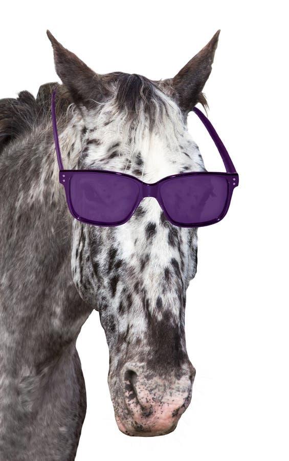 Tête d'un cheval repéré avec des lunettes de soleil photos stock