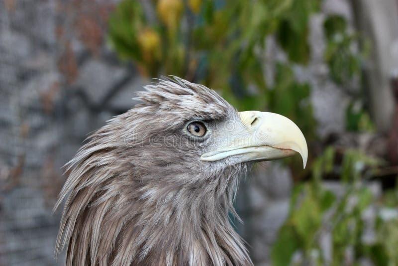 Tête d'un oiseau avec le grand bec photographie stock