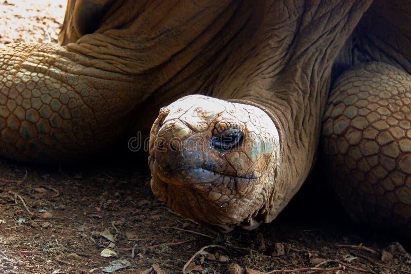 Tête d'une tortue géante photo libre de droits