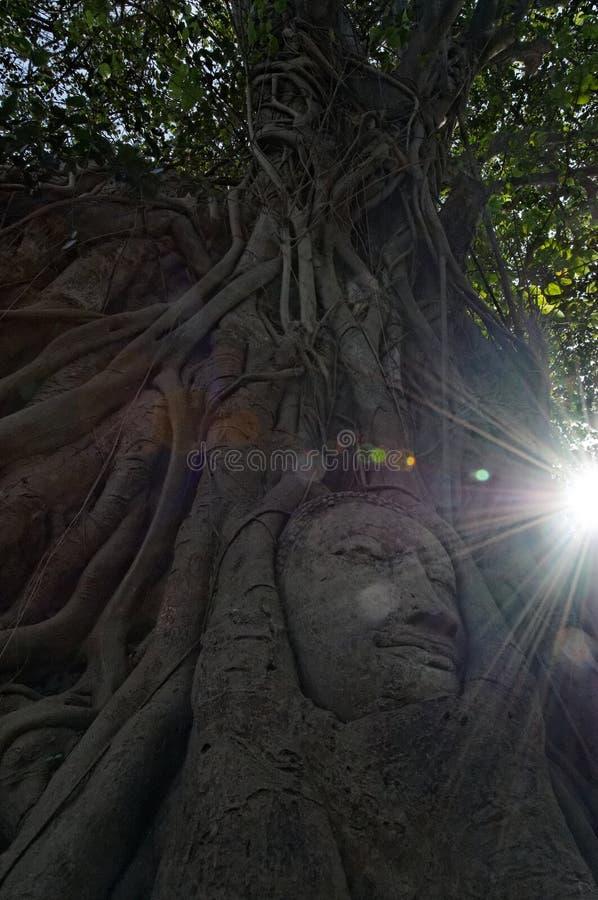 Tête de Bouddha photographie stock