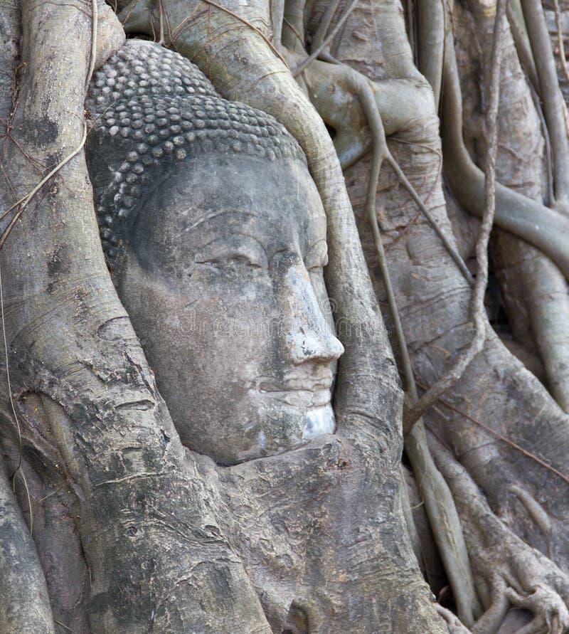 Tête de Bouddha chez Wat Mahathat, Ayuthaya, Thaïlande photographie stock
