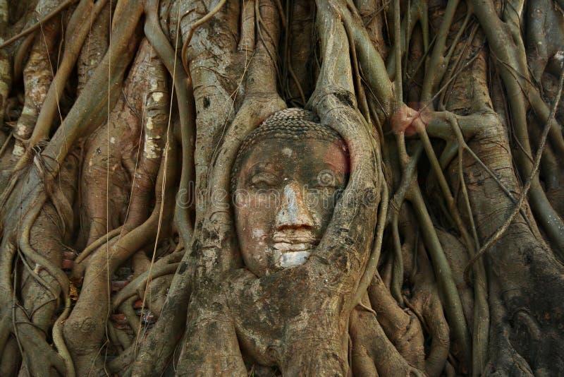 Tête de Bouddha dans des racines d'arbre chez Wat Mahathat, Ayutthaya photo stock