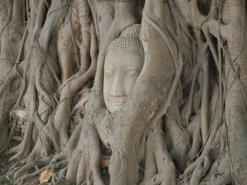 Tête de Bouddha dans l'arbre images stock