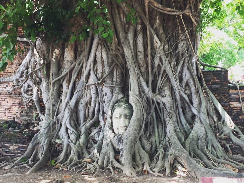 Tête de Bouddha dans l'arbre photo stock