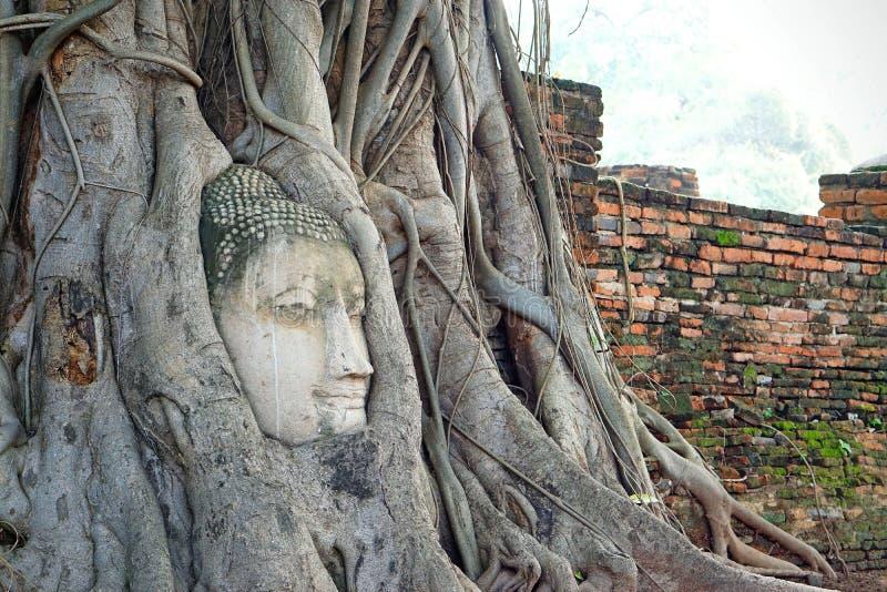 Tête de Bouddha dans les racines d'arbre photo stock
