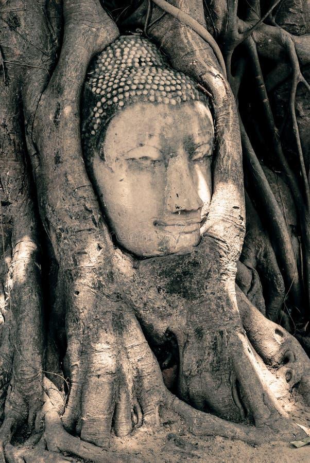 Tête de Bouddha entourée par des racines photographie stock libre de droits