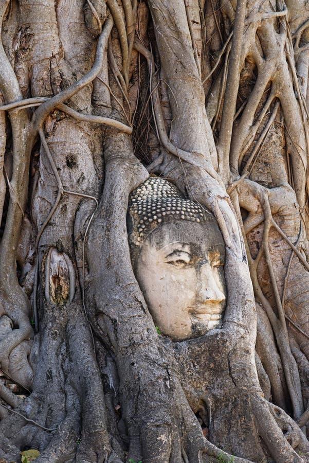 Tête de Bouddha entourée par des racines chez Wat Mahathat à Ayutthaya Thaïlande photographie stock
