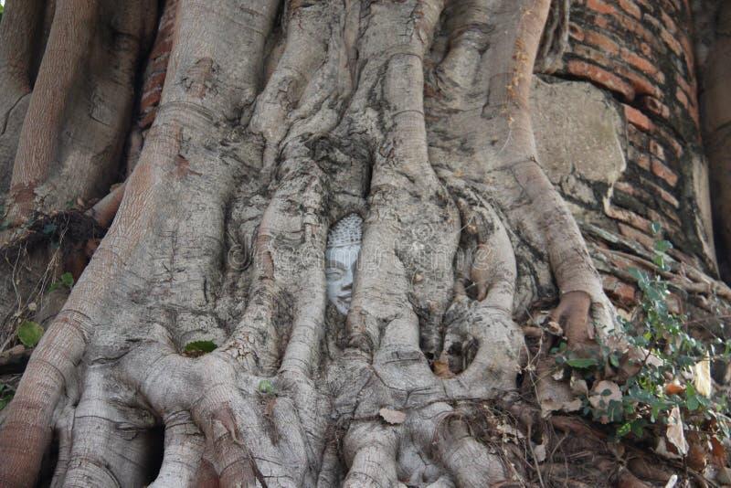Tête de Bouddha et écorce d'arbre photo stock