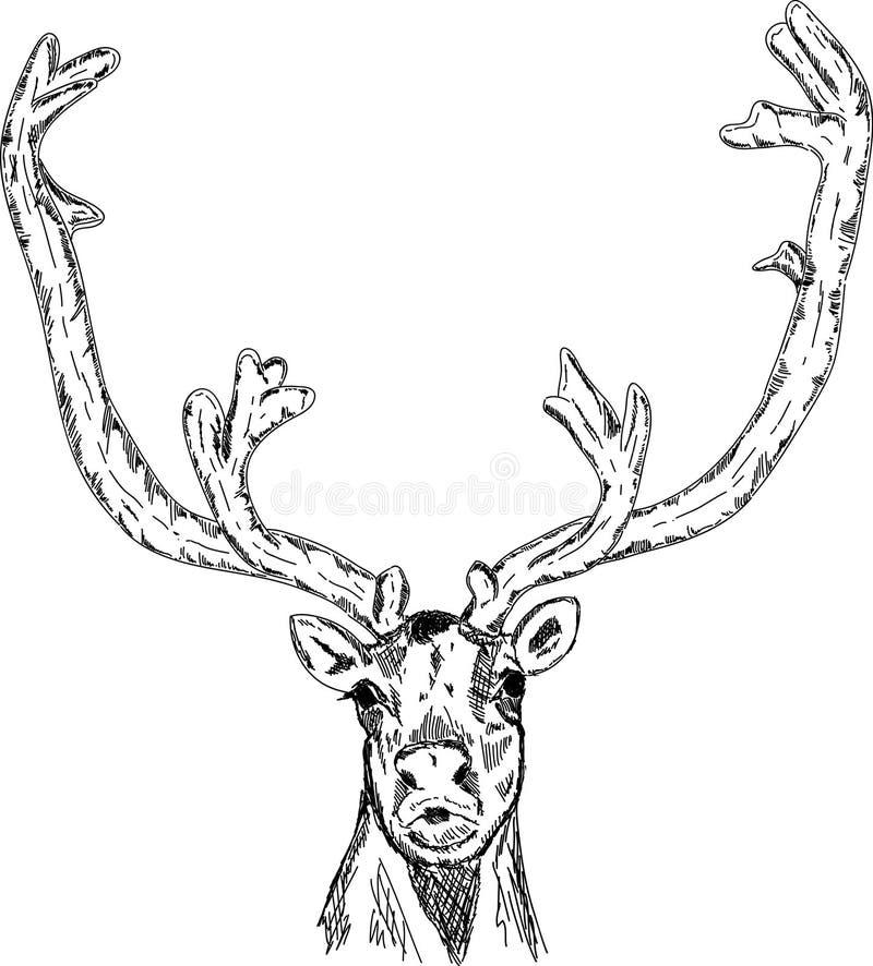 Tête de Cariboo illustration libre de droits