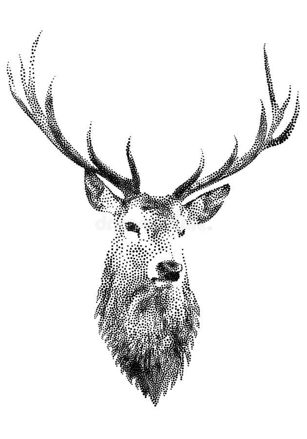 Tête de cerfs communs,   illustration stock