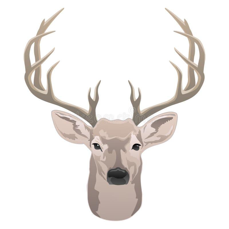 Tête de cerfs communs, beau mâle avec l'illustration de vecteur d'isolement par couleur d'andouillers illustration de vecteur