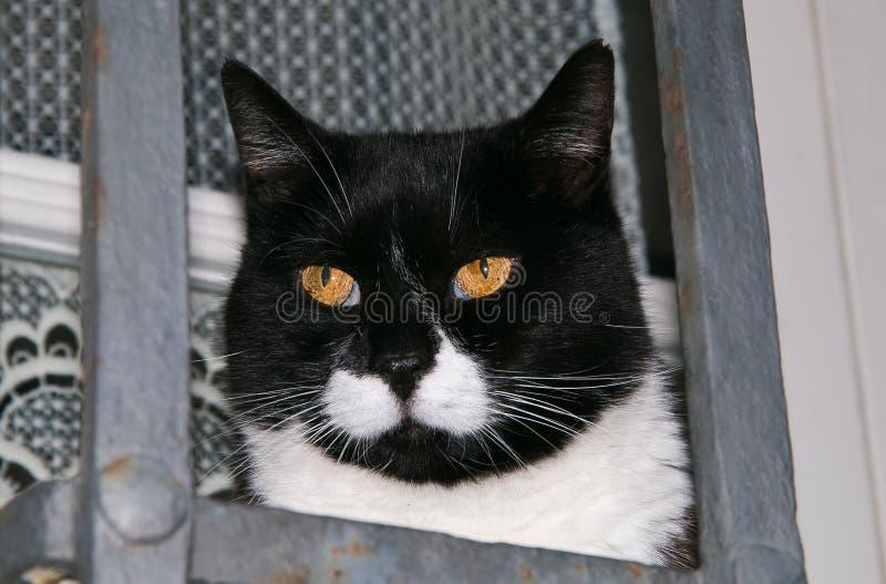 Tête de chat avec les yeux oranges photographie stock libre de droits