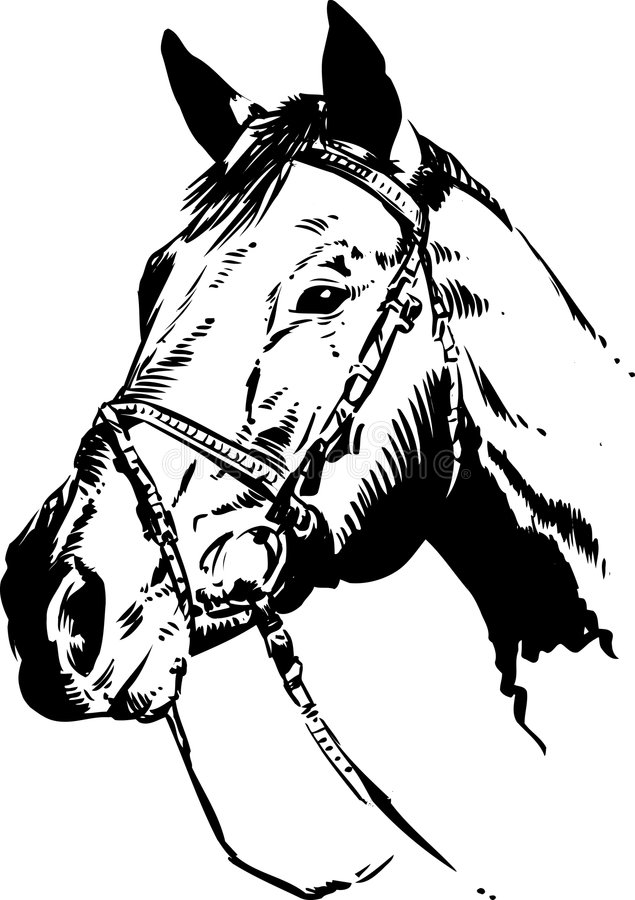 Tête de cheval illustration libre de droits