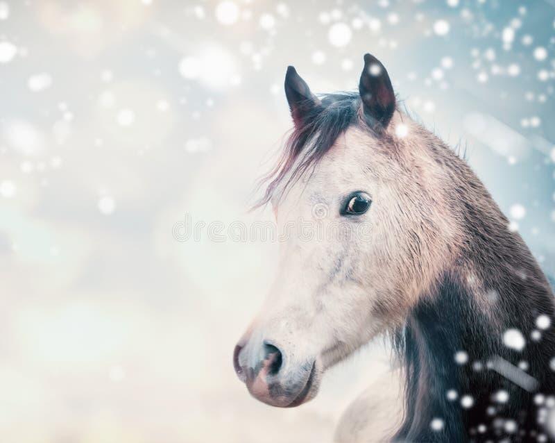 Tête de cheval au fond de nature d'hiver photographie stock