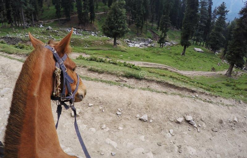 Download Tête de cheval brun image stock. Image du équin, bron - 56481347