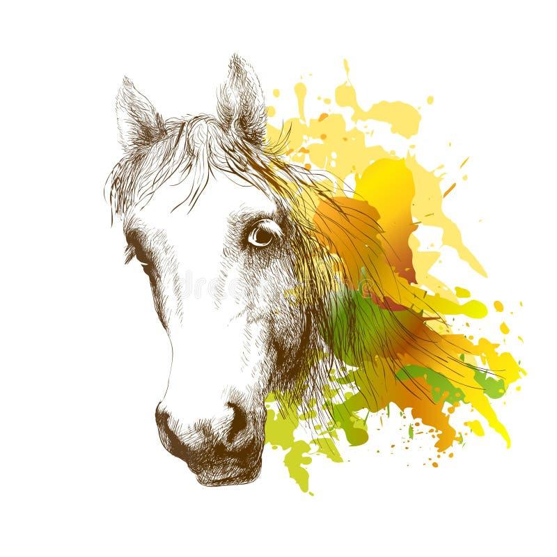 Tête de cheval d'isolement sur le blanc Un portrait de plan rapproché du visage d'un cheval Dessin d'encre illustration libre de droits