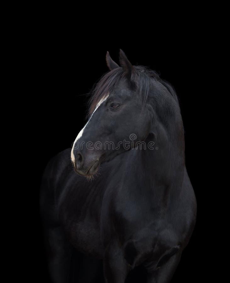 Tête de cheval noire sur le noir image libre de droits
