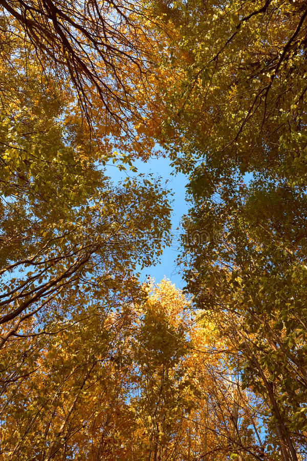 Tête de divers arbres d'automne image libre de droits