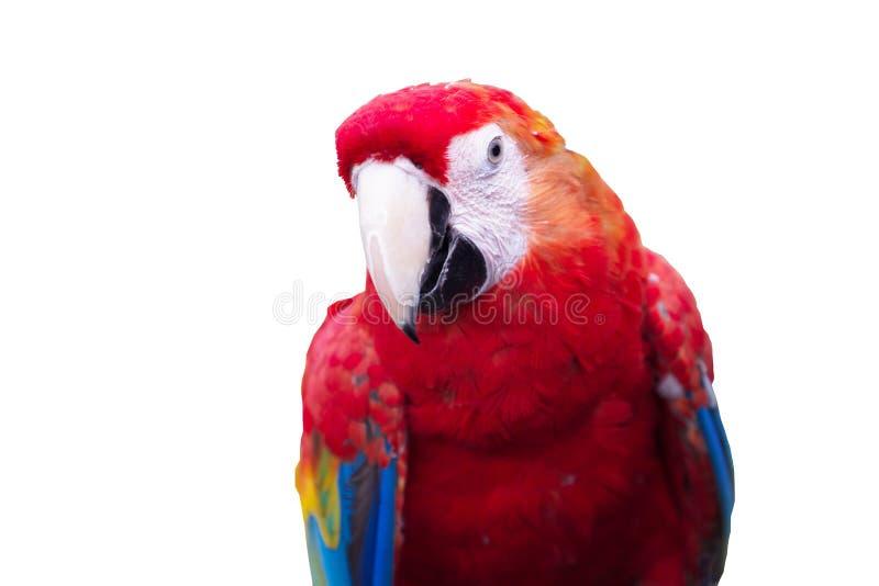 Tête de perroquet photo libre de droits