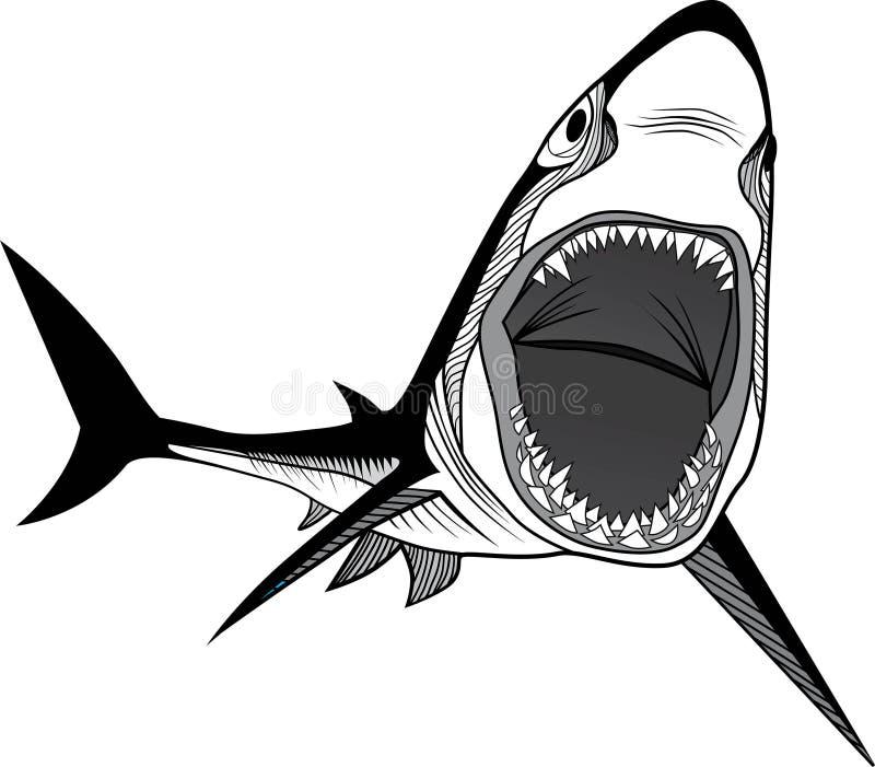Tête de poissons de requin illustration stock