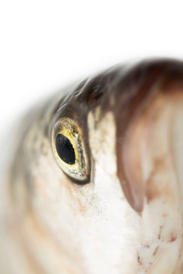 Tête de poissons Macro images stock