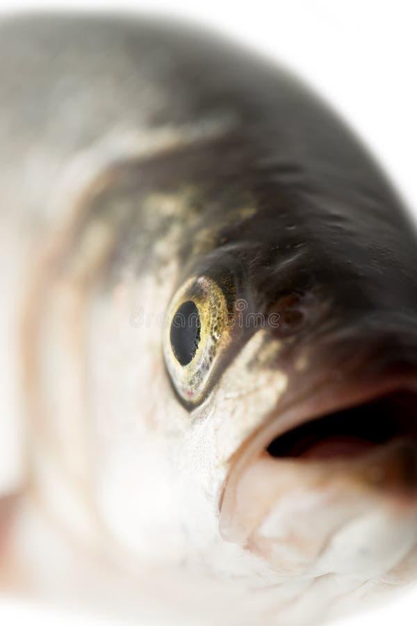 Tête de poissons Macro photographie stock libre de droits