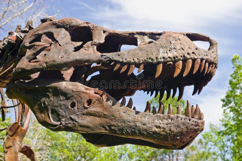 Tête de T-rex image libre de droits