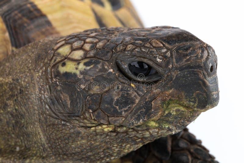 Tête de tortue de plan rapproché photo libre de droits