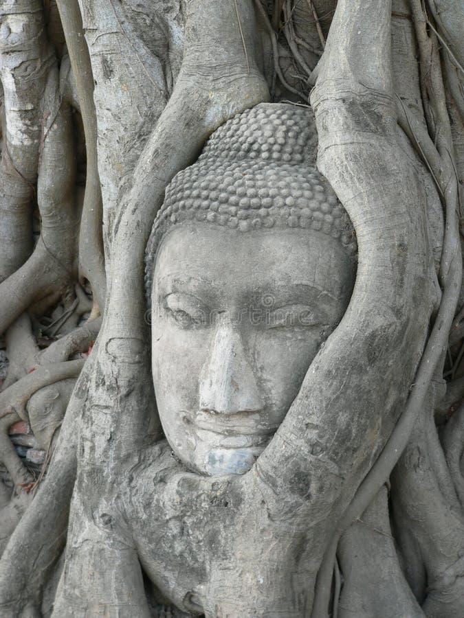 Tête en pierre de Bouddha entourée par des fonds d'arbre image libre de droits