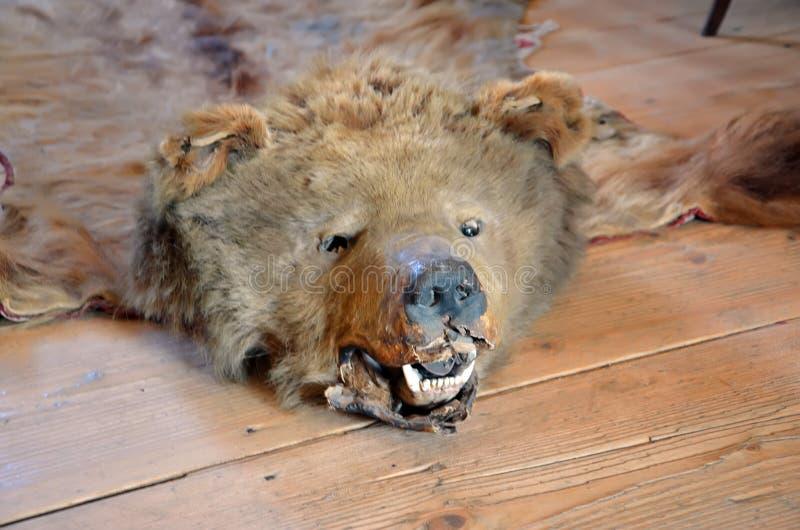 Tête et cuir de grand vieux trophée de chasse d'ours brun images libres de droits