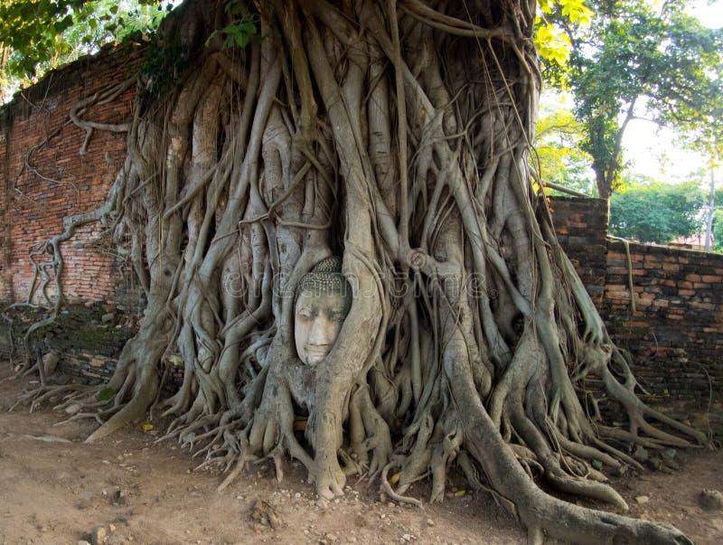 Tête invisible de la Thaïlande de grès Bouddha dans des racines d'arbre chez Wa image libre de droits