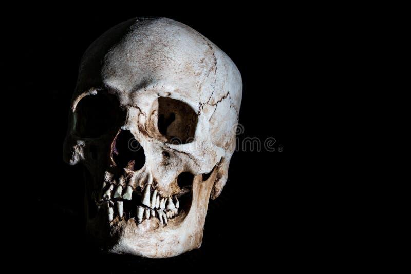 Tête squelettique humaine de crâne d'isolement sur le noir images stock