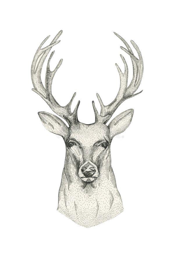 T te tir e par la main de cerfs communs avec des klaxons noir animal de croquis de dessin - Dessin de tete de cerf ...