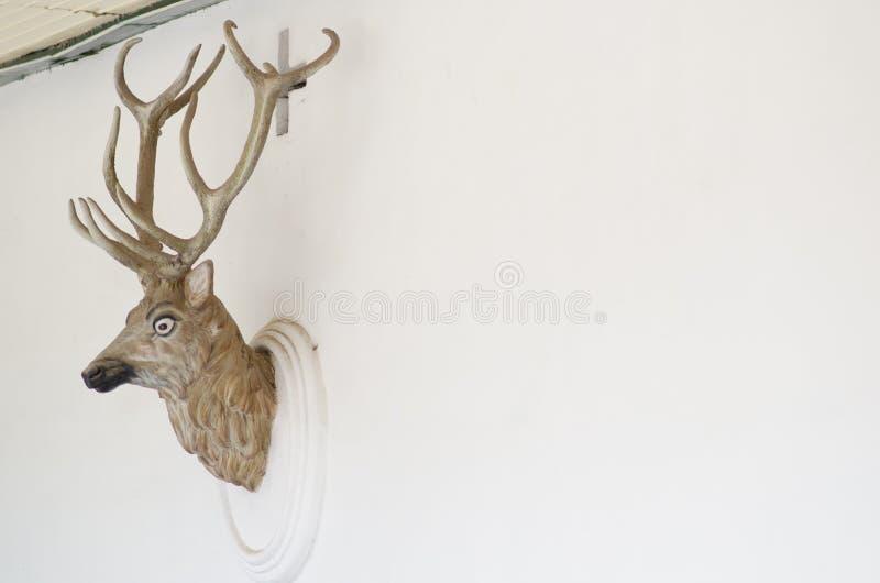 Têtes bourrées de cerfs communs sur le mur blanc photographie stock