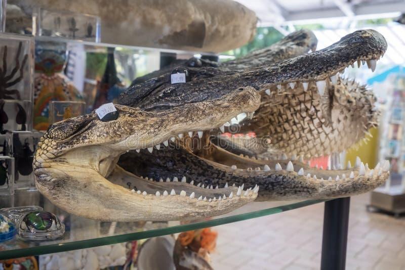 Têtes d'alligator avec la bouche grande ouverte dans une boutique de souvenirs photos libres de droits