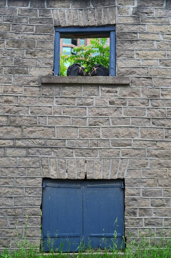 Têtes de cheval dans le vieux châssis de fenêtre en pierre de bâtiment image stock