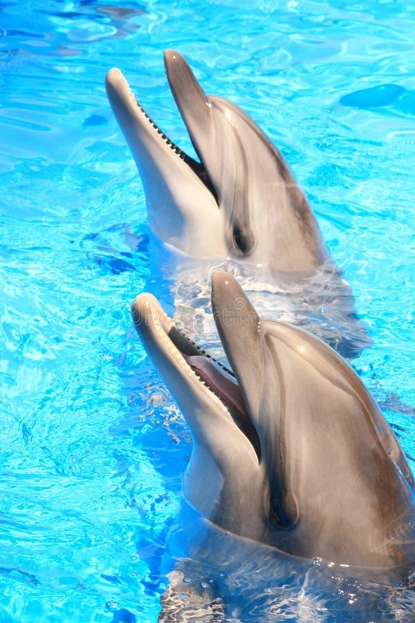 Têtes de dauphins : Sourires - illustration courante images libres de droits