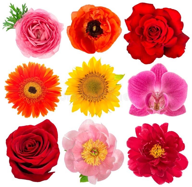 Têtes de fleur simples Rose, orchidée, pivoine, tournesol, gerber image stock