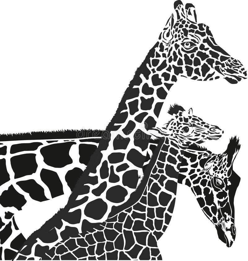 Têtes de girafe illustration libre de droits