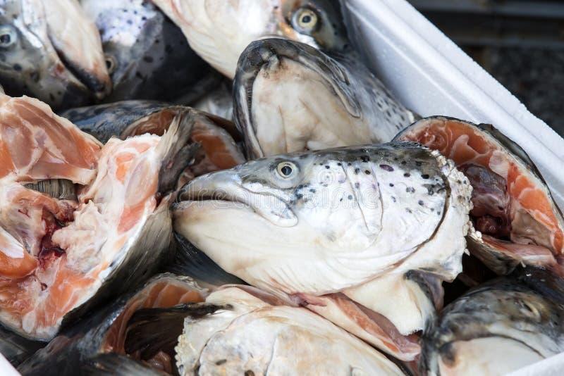 Têtes des poissons saumonés sur le marché photos stock