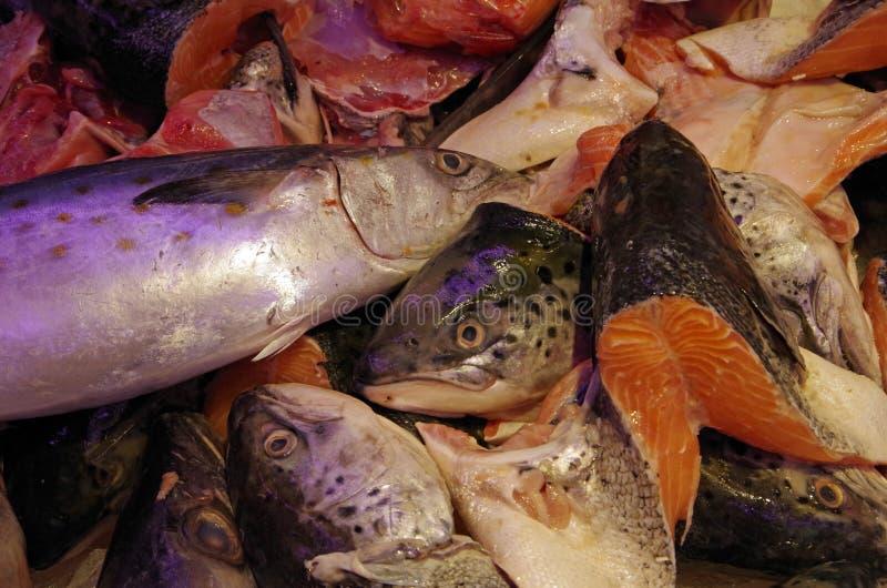 Têtes et pièces saumonées de poissons photos stock