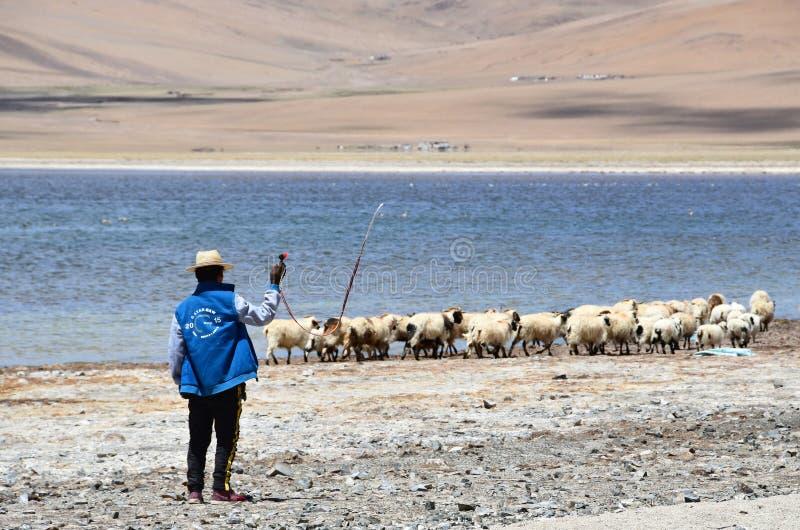 Tíbet, China, junio, 06, 2018 Pastor y ovejas en la orilla del lago Gomang en la meseta tibetana fotografía de archivo