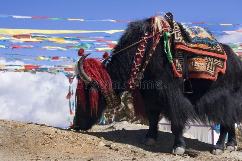 Tíbet - yac - alto paso de Yamdrok - China foto de archivo